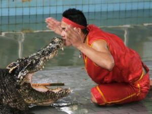 Достопримечательности Таиланда_шоу крокодилов