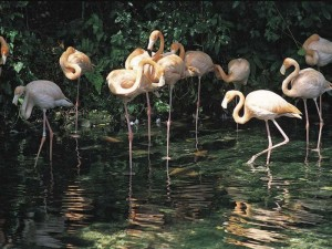 Haragua_park_Dominikana