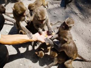 monkey_Vietnam