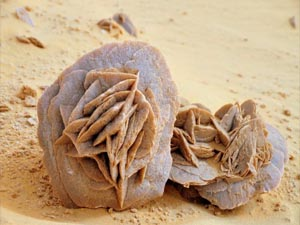 Достопримечательности Туниса Роза Сахары