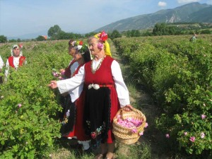 Bulgaria_dolina_roz